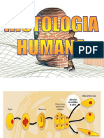 #Histologia Humana