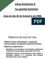 Anatomia Genital Feminino