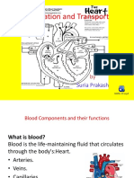 Blood Circulation and Transport