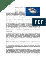 Datos curiosos del tiburón