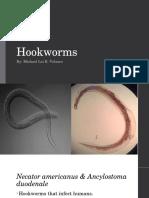 MLV-Hookworm.pptx