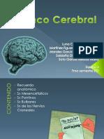 equipo-2-tronco-cerebral.pptx