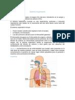 Sistema respiratorio para nancy.docx
