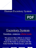 Excretory System Final[1]