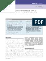Anatomia plexului brahial