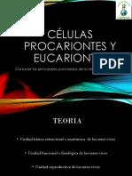 Células Procariontes y Eucariontes.2017ppt