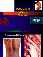 Pathology of Kidney Disorders