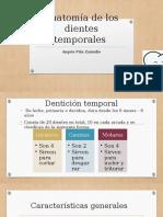 Anatomía de Los Dientes Temporales