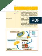 VII.regulación Farmacologica. Docx (1)