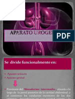 urinario-130310124139-phpapp01