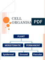 F4 C2 Cell organisation 2.2 Plant & 2.3 (2).ppt