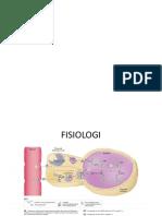 Fisiologi tiroid