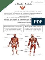 Ficha Informativa e Formativa Os Músculos