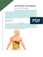 10 Sistem Organ Manusia Dan Fungsinya