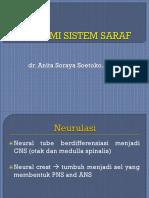 Susunan Saraf- Anita
