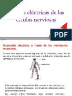 señales electricas de las células nerviosas