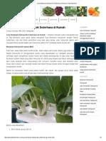 Cara Bertanam Hidroponik Sederhana Di Rumah _ Tips Berkebun