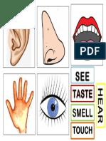 Five Senses Material