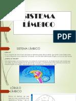 neuroanatomia..pptx
