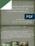 0 Recunoasterea Buruienilor Culturile Agricole