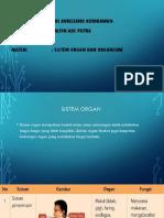 PPT Biologi sistem organ.pptx