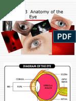 937 Anatomy of the Eye