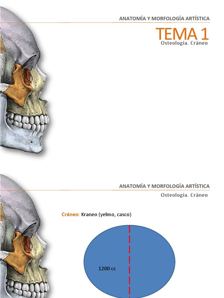 Tema 1 Cráneo