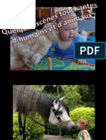 Animaux Et Humains