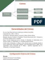 PONENCIA CRANEO USMP