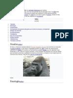 Info Gorilas