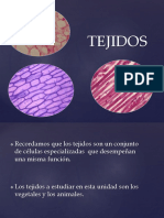 tejido-vegetal-animal1.ppt