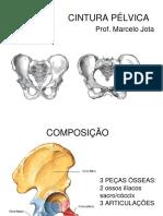 Cinesiologia Da CINTURA PÈLVICA [Salvo Automaticamente]