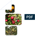 Hermafrodita frutales