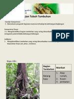 3 Pemanfaatan Bagian Tubuh Tumbuhan Dan Pelestariannnya