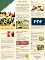 Cuidados del Patito BB.pdf