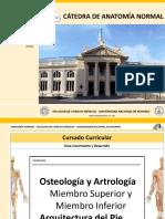 04. Osteologia y Artologia Miembros. Arquitectura Del Pie 2016