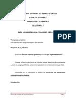 Práctica  No. 4 (17) (1)