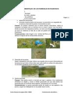 Problemas ambientales  en los humedales de Huanchaco.docx