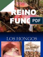 2015 Clase Reino Fungi