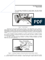 ouvido_humano.pdf