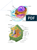 animal cell and plant cell.docx