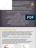 Embriologia Humana - Ovario y Testiculo