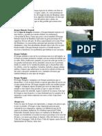 El Bosque de coníferas hn.docx