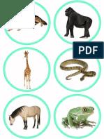 animales clasificacion.pdf