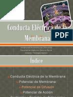 potencialesdemembranapotencialesdeaccion-120215220743-phpapp02