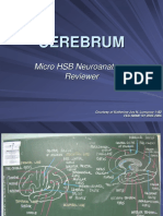 Micro HSB Reviewer - Cerebrum.ppt
