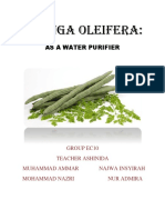 Moringa Oleifera Project by Ammar Sem