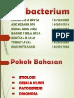 Mycobacterium - Copy.pptx