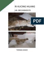 Di Cari Kucing Hilan1