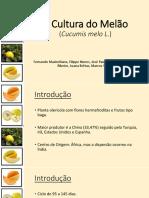 A Cultura Do Melão